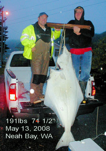 Huge Halibut With Fishing Lights